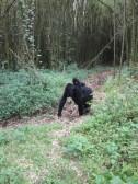 Piggy-(gorilla-?)back ride!