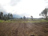 . . . passing various crops along the way . . .