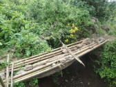 """The """"bridge"""" crossing into the jungle."""
